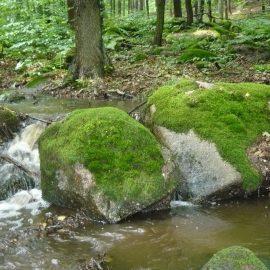 Voděradské bučiny potok 1